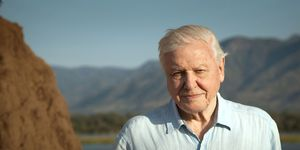 David Attenborough, Dynasties tv show