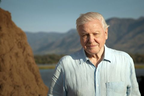 David Attenborough, Dynasties tv show