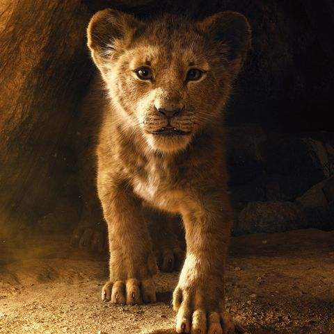 Disney's The Lion King director Jon Favreau reveals how Sir David Attenborough helped to shape the film