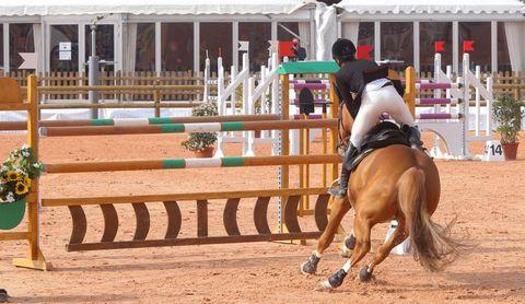 Human, Vertebrate, Shoe, Horse, Horse supplies, Saddle, Halter, Horse tack, Animal sports, Bridle,