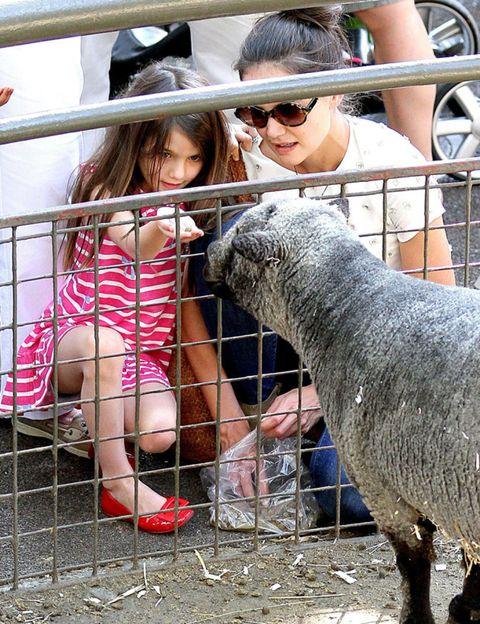 Human, Vertebrate, Sunglasses, Mammal, Hat, Baby & toddler clothing, Snout, Fur, Goggles, Sheep,