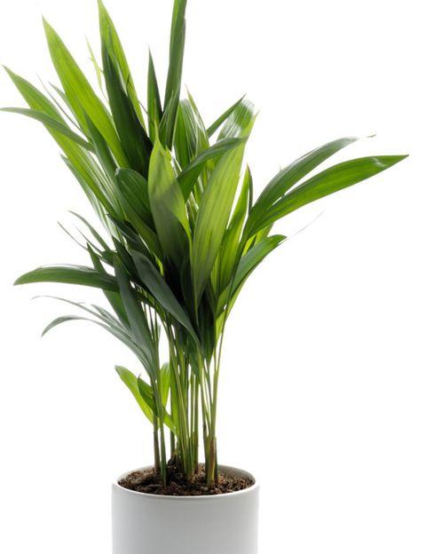 Green, Leaf, Terrestrial plant, Botany, Flowerpot, Plant stem, Houseplant, Herbaceous plant, Perennial plant, Vase,