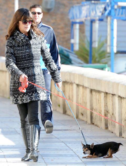 Dog breed, Vertebrate, Leash, Outerwear, Dog, Carnivore, Mammal, Style, Street fashion, Sunglasses,