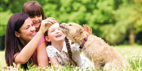 Human, Fun, Dog breed, Vertebrate, Dog, Carnivore, Mammal, Happy, People in nature, Facial expression,