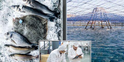Vertebrate, Fish, Fin, Seafood, Fish, Marine biology, Net, Mesh, Ray-finned fish, Marine mammal,