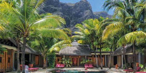 Swimming pool, Tree, Leisure, Resort, Arecales, Tourism, Aqua, Azure, Magenta, Flowering plant,