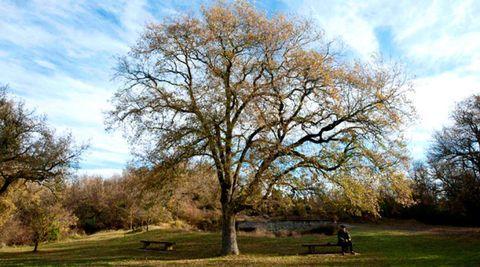 Branch, Sky, Cloud, Tree, Natural landscape, Woody plant, Trunk, Grassland, Park, Twig,