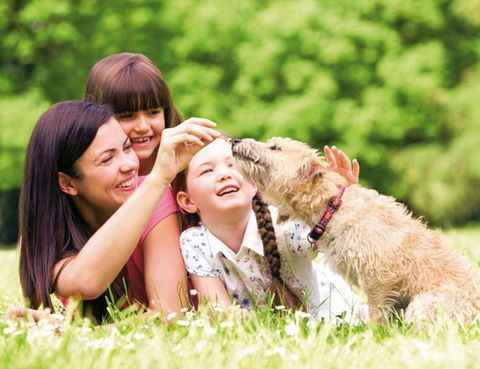 Human, Dog breed, Carnivore, Dog, Happy, People in nature, Summer, Interaction, Sporting Group, Bangs,