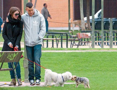 Vertebrate, Dog, Mammal, Carnivore, Dog breed, Companion dog, Bench, Sporting Group, Toy dog, Canidae,
