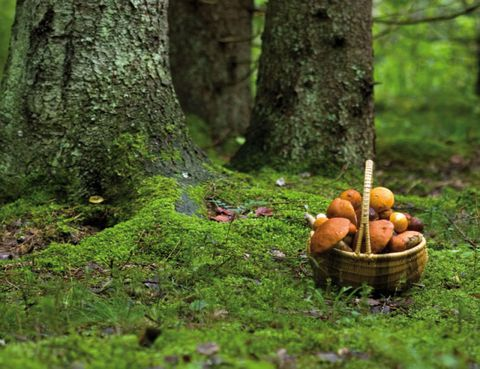 Deciduous, Tree, Ingredient, Forest, Old-growth forest, Basket, Natural foods, Produce, Woody plant, Terrestrial plant,