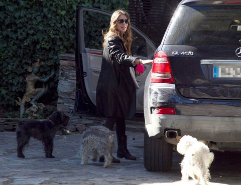 Human, Automotive tail & brake light, Dog breed, Dog, Vertebrate, Carnivore, Mammal, Vehicle registration plate, Sunglasses, Sporting Group,