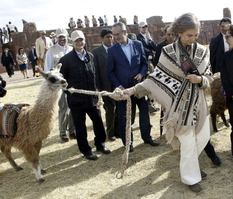 Human, People, Llama, Vertebrate, Alpaca, Fur, Tradition, Livestock, Camelid, Sheep,