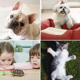 Organism, Vertebrate, Skin, Photograph, Carnivore, Facial expression, Dog, Iris, Cat, Dog breed,