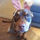 Dog breed, Wood, Brown, Floor, Flooring, Vertebrate, Dog, Hardwood, Carnivore, Wood stain,