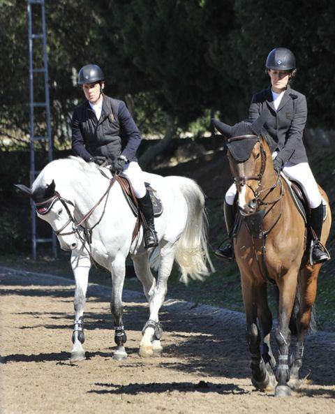 Halter, Bridle, Helmet, Horse supplies, Horse, Vertebrate, Shoe, Horse tack, Rein, Riding boot,