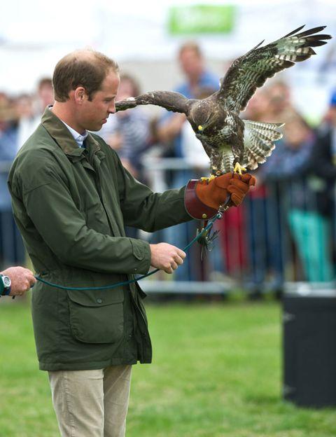 Bird, Vertebrate, Bird of prey, Accipitridae, Beak, Wing, Falconiformes, Watch, Accipitriformes, Falcon,