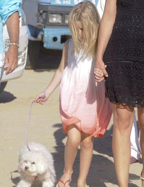 Leg, Dog breed, Dog, Dress, Mammal, Fender, Carnivore, Toy dog, Companion dog, Maltepoo,
