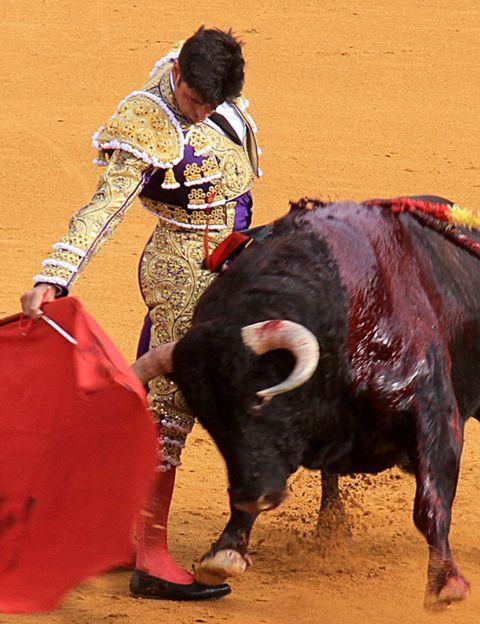 Matador, Bull, Entertainment, Sport venue, Event, Performing arts, Bullring, Bovine, Bullfighting, Magenta,