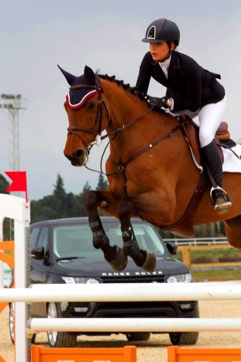 Show jumping, Vertebrate, Bridle, Shoe, Equestrian helmet, Halter, Recreation, Jumping, English riding, Horse,