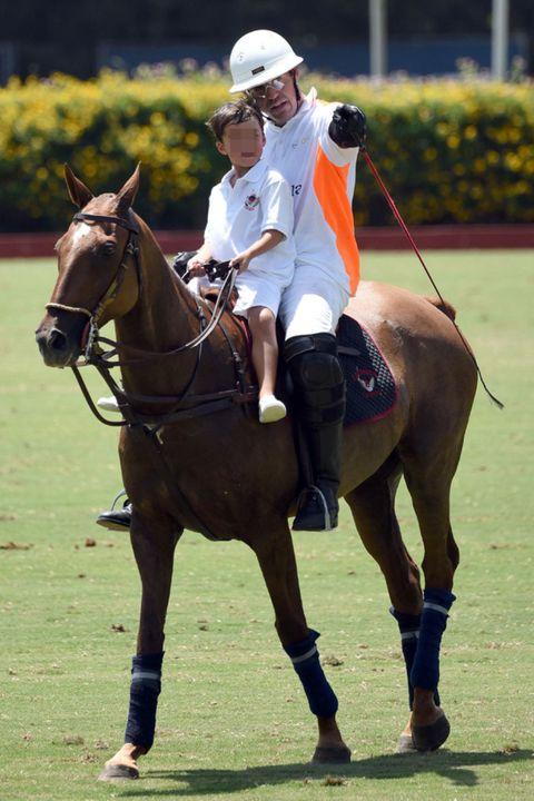 Halter, Human, Bridle, Horse supplies, Shoe, Rein, Vertebrate, Horse, Horse tack, Animal sports,