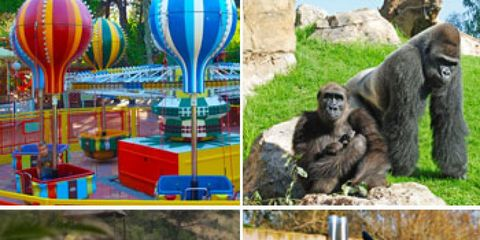 Nature, Organism, Vertebrate, Hot air ballooning, Balloon, Aerostat, Leisure, Adaptation, Air sports, Hot air balloon,