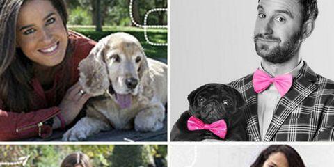 Human, Dog breed, Carnivore, Dog, Vertebrate, Mammal, Dress shirt, Beard, Sitting, Sporting Group,