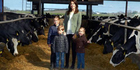 People, Bovine, Farm, Standing, Mammal, Rural area, Dairy cow, Working animal, Travel, Livestock,