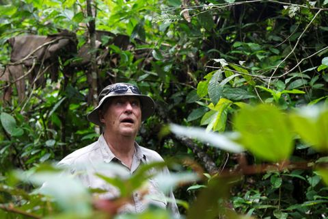 Human, Shirt, Adaptation, People in nature, Forest, Jungle, Sunglasses, Sun hat, Rainforest, Goggles,