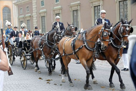 People, Bridle, Halter, Rein, Horse supplies, Horse, Vertebrate, Carriage, Horse tack, Horse harness,