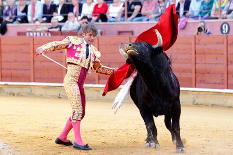Matador, Bull, Entertainment, Sport venue, Performing arts, Bovine, Bullring, Bullfighting, Pink, Animal sports,