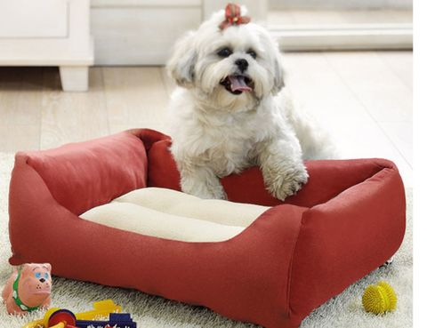 Vertebrate, Dog, Toy dog, Carnivore, Dog breed, Toy, Companion dog, Living room, Baby toys, Canidae,