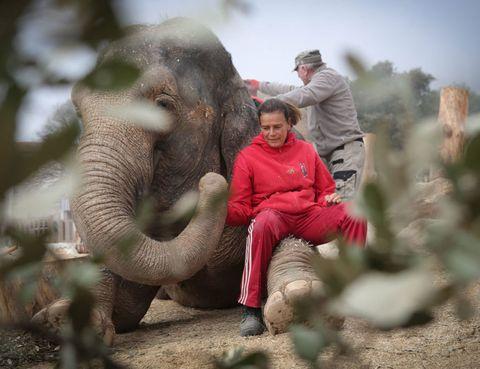 Elephant, Elephants and Mammoths, Indian elephant, Adaptation, Interaction, Terrestrial animal, Wrinkle, Working animal, Mahout, African elephant,