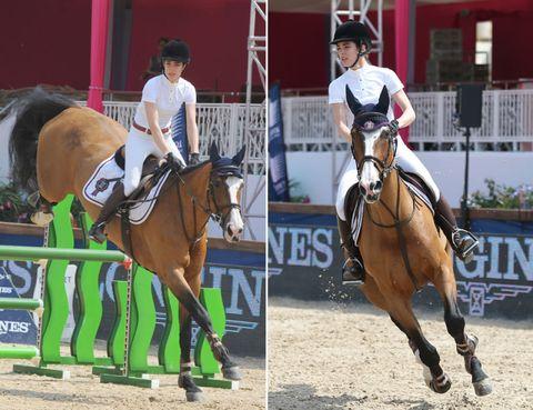 Human, Halter, Bridle, Shoe, Horse supplies, Rein, Horse, Jockey, Vertebrate, Equestrian sport,