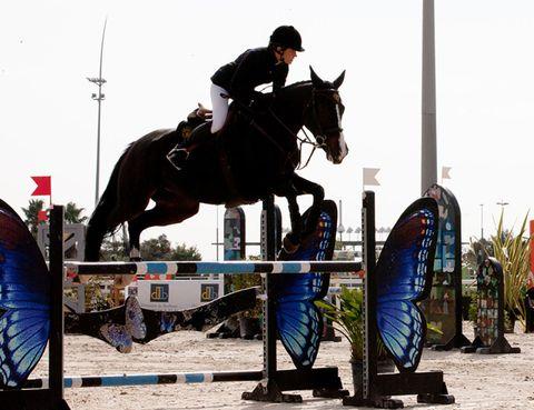 Human, Show jumping, Bridle, Vertebrate, Horse, Jumping, English riding, Horse tack, Jumping, Halter,