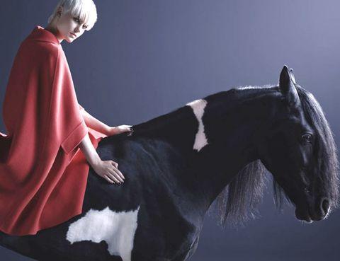 Horse, Working animal, Interaction, Snout, Livestock, Pack animal, Stallion, Mane, Costume design,