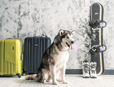 Dog, Carnivore, Dog breed, Sled dog, Dog supply, Sporting Group, Snout, Pet supply, Canidae, Waste containment,