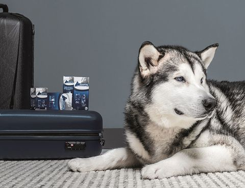 Dog, Sled dog, Carnivore, Black, Grey, Snout, Terrestrial animal, Fur, Baggage, Monochrome photography,