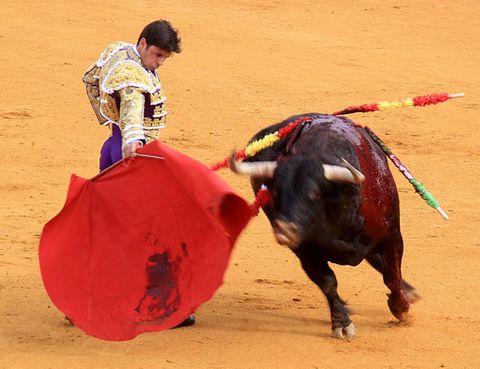 Matador, Bull, Human, Sand, Sport venue, Performing arts, Entertainment, Bullring, Bullfighting, Bovine,