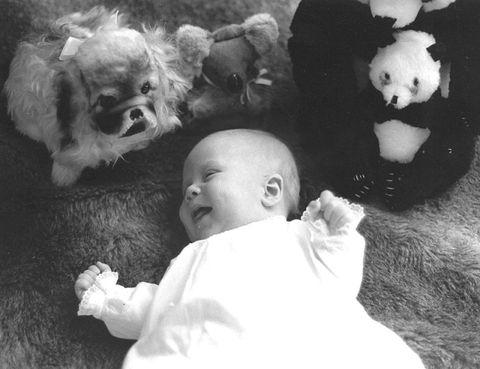 Organism, Stuffed toy, Toy, Plush, Baby & toddler clothing, Toddler, Fur, Baby, Baby toys, Toy dog,