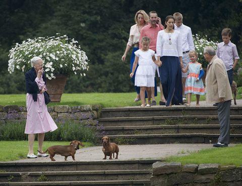Footwear, Plant, Dress, Dog breed, Carnivore, Dog, Liver, Garden, Spring, Companion dog,