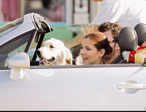 Dog, Carnivore, Vehicle door, Balloon, Dog breed, Automotive mirror, Automotive side-view mirror, Windshield, Blond, Companion dog,