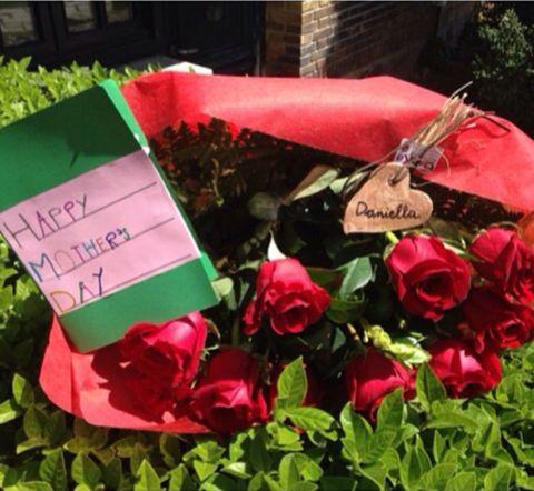 Petal, Flower, Pink, Flowering plant, Garden roses, Carmine, Hybrid tea rose, Rose family, Rose order, Rose,