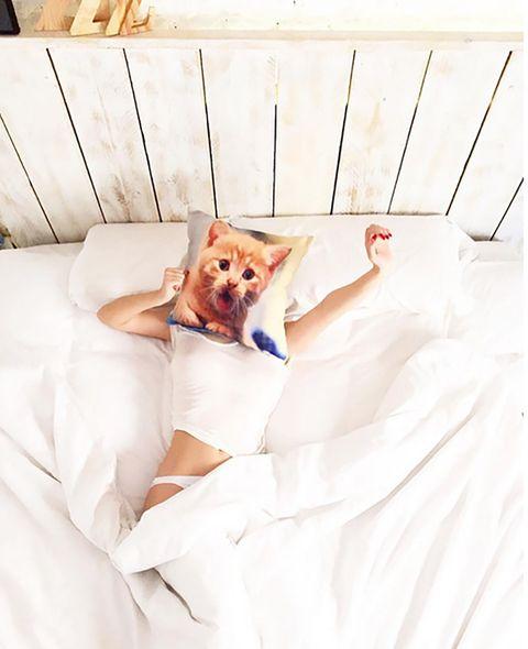 Carnivore, Comfort, Linens, Bedding, Canidae, Peach, Bed sheet, Blanket, Duvet,