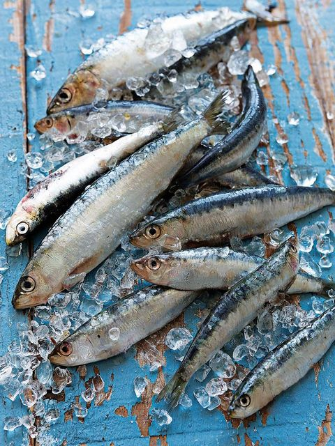 White, Fish, Fish, Seafood, Grey, Anchovy (food), Forage fish, Marine biology, Oily fish, Silver,