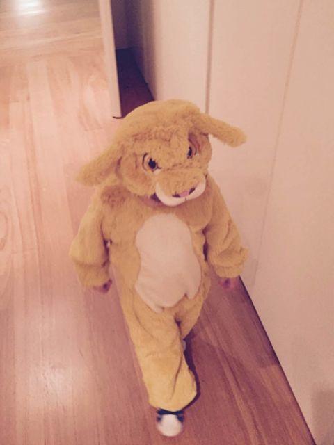 Stuffed toy, Wood, Toy, Plush, Hardwood, Floor, Wood stain, Flooring, Teddy bear, Wood flooring,