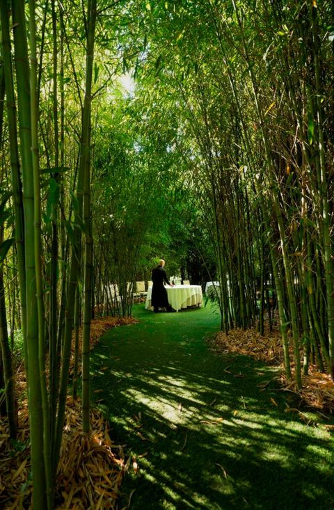 Vegetation, Green, Leaf, Forest, Sunlight, Woody plant, Botany, Tints and shades, Terrestrial plant, Bamboo,
