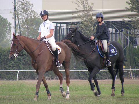 Halter, Bridle, Horse supplies, Shoe, Rein, Vertebrate, Horse, Helmet, Horse tack, Riding boot,