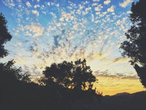 Nature, Branch, Sky, Cloud, Atmosphere, Natural landscape, Tree, Leaf, Sunlight, Amber,