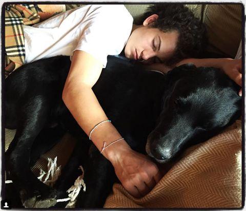Human, Comfort, Dog breed, Vertebrate, Dog, Carnivore, Mammal, Interaction, Sitting, Black hair,