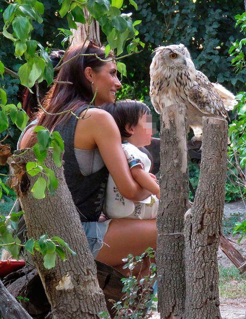 Bird of prey, Beak, Accipitridae, Bird, Owl, Adaptation, People in nature, Falconiformes, Trunk, Trunk,